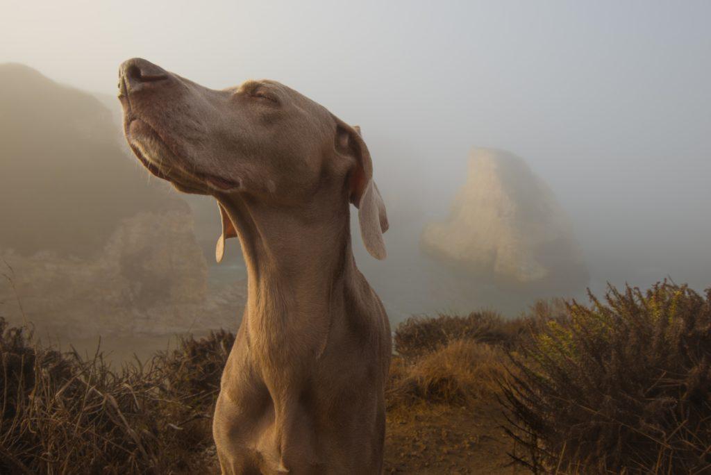 Dog scent smelling